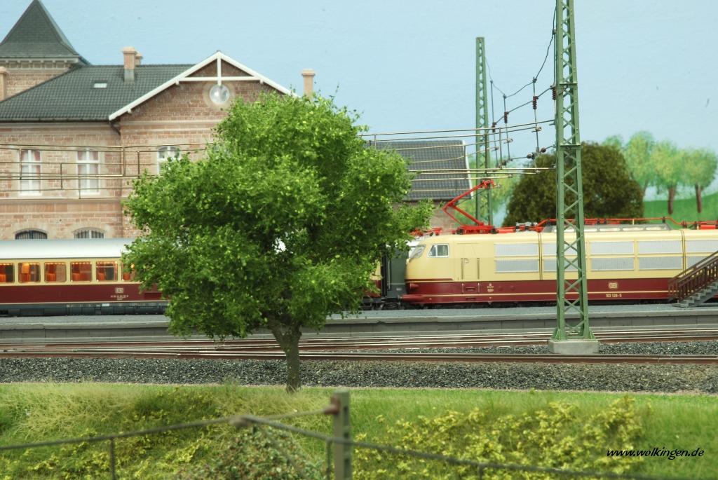 Laubbaum am Bahnhof Wolkingen