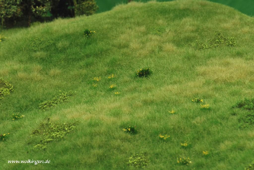 Wildwiese